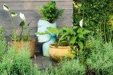 Jardim sustentável tem até orquidário